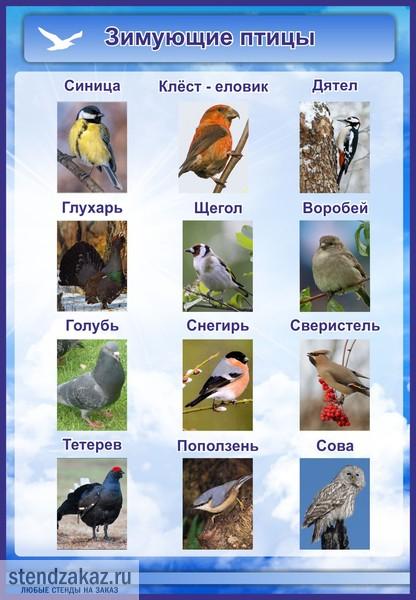 Выполни задания на с.14,15. в рабочей тетради.  Где зимуют птицы?
